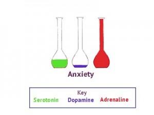 neurotransmitters, anxiety, stress, hormones