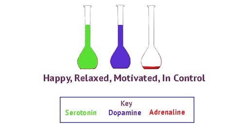 happy, serotonin, motivated, dopamine