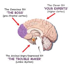 The Brain all