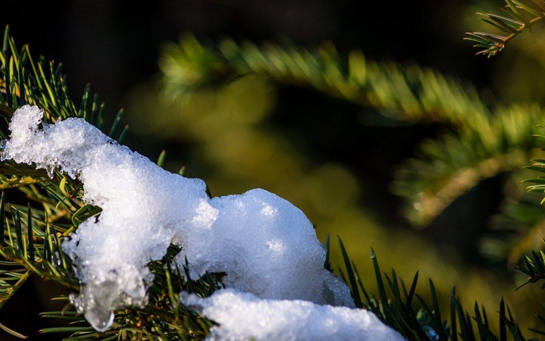 Is Ecotherapy seasonal?