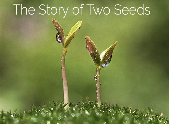 The Story of Two Seeds – 2 Minute Metaphor